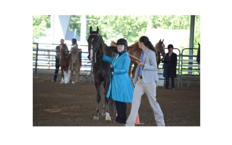 Madison County Fair: Happy trails to horses (and donkeys)
